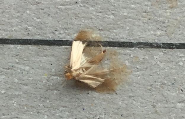 Moths Caught 2